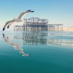 Seagull and west pier